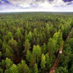 На сохранение тюменских лесов потратят 364 миллиона рублей