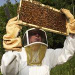 Паспорта для пчел и их владельцев