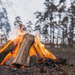 В лесах Тюменской области продлен особый противопожарный режим