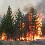 С 1 по 22 июля на территории Тюменской области зафиксировано 49 лесных пожаров