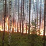 В Югре из-за лесных пожаров введен режим ЧС