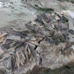 В Тюменской области нашли кладбище мамонтов