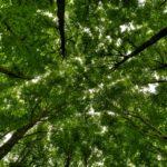 Тюменские леса очистят от мусора