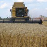 В Ярковском районе определилось предприятие с самой высокой урожайностью зерновых культур