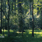 19 сентября пройдет акция по посадке леса «Сохраним лес»