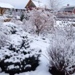 Как защитить посадки от морозов?
