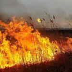 В Тюменской области введен особый противопожарный режим