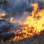 60 пожаров на площади более 4000 га произошло в Тюменской области за сутки
