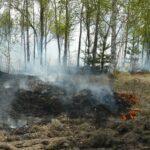 В Тюменской области за сутки потушили шесть лесных пожаров на площади 166,8 га