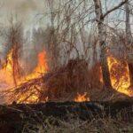 В Тюменской области открыта горячая линия для граждан, пострадавших от лесных пожаров