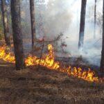 Александр Моор провел выездное заседание регионального оперштаба по охране лесов от пожаров