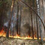 Восемь лесных и 19 ландшафтных пожаров возникли в Тюменской области за сутки