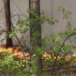15 лесных пожаров зафиксировано за сутки в Тюменской области