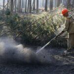 Пять лесных пожаров ликвидированы и пять новых возникли в Тюменской области в минувшие сутки