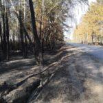 В Тюменской области тушат 19 лесных пожаров на площади 1 тыс. 215 га