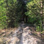 В лесах Тюменской области режим ЧС отменен с 9 июня