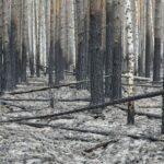 В Тюменской области действуют 14 лесных пожаров на площади более тысячи гектаров