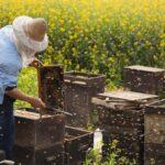 Школа фермеров: кто хочет стать пчеловодом?